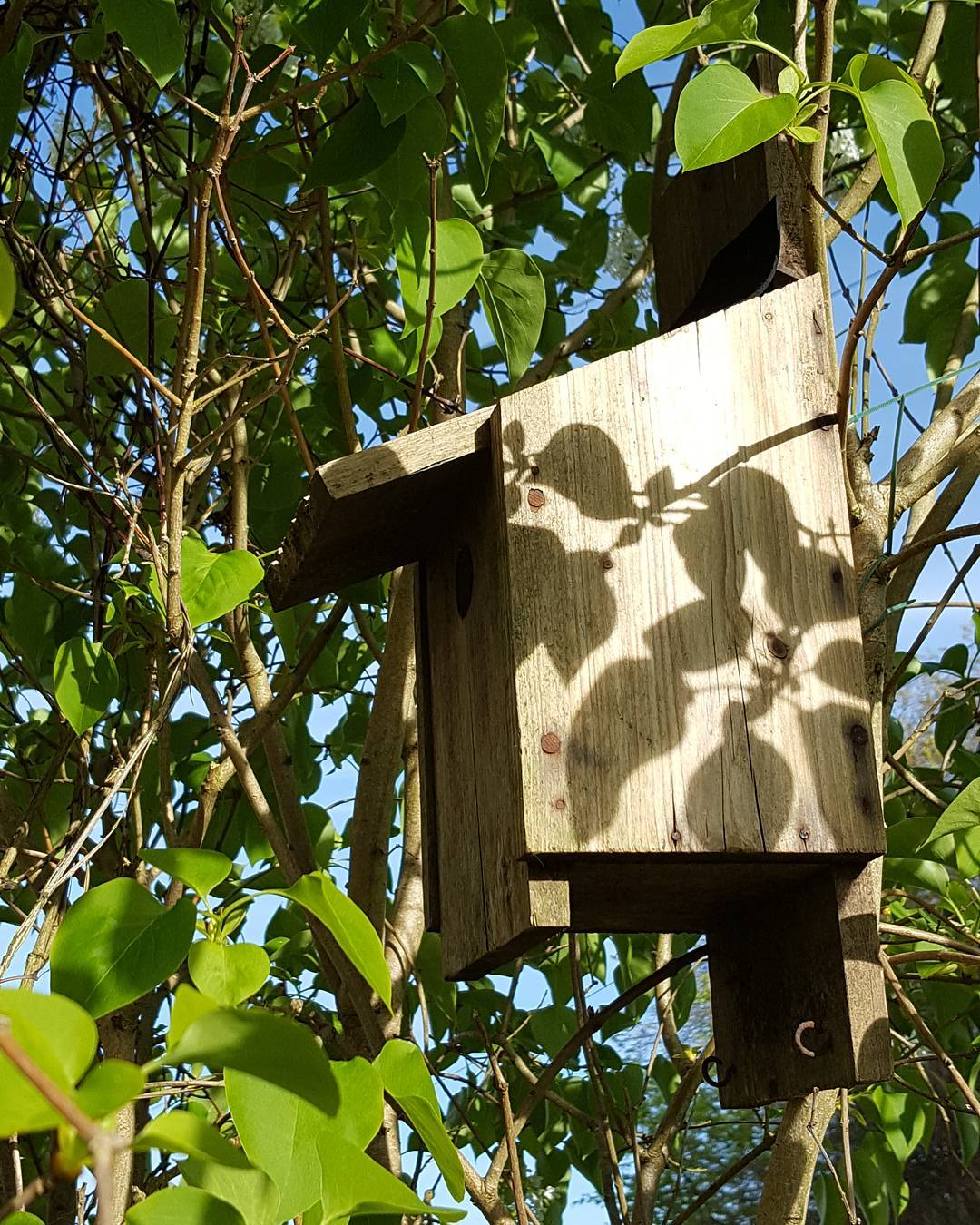 Judging from the bluetits going in this bird box withhellip