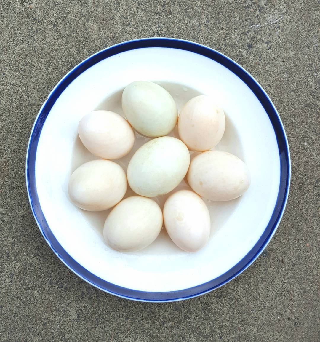 A beautiful bowl of freshly laid duck eggs courtesy ofhellip