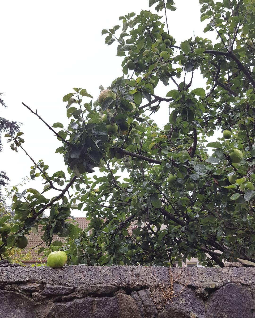 Jane saw the perfectly ripe apple sitting on the wallhellip